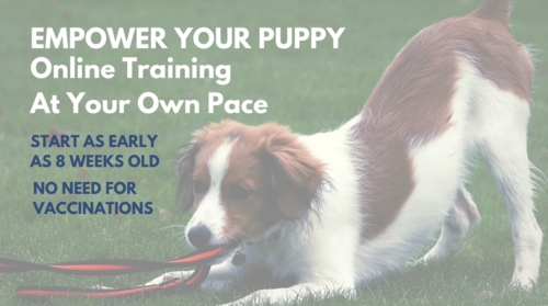 Online Self-Paced Puppy Course